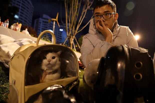 Deretan Nama Kucing Jantan dan Betina, kumpulan nama kucing, nama-nama kucing, nama kucing