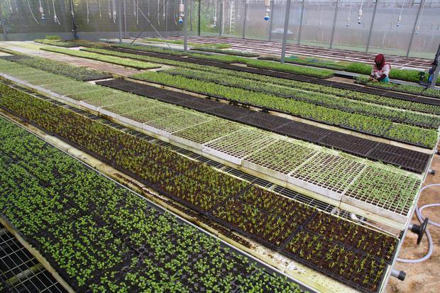 pertanian, startup, microsoft, teknologi, tanihub
