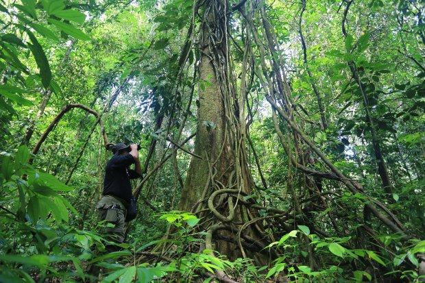 Jagawana Pelindung Hutan Leuser