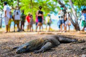 Wisata Super Prioritas Labuan Bajo di Masa Pandemi