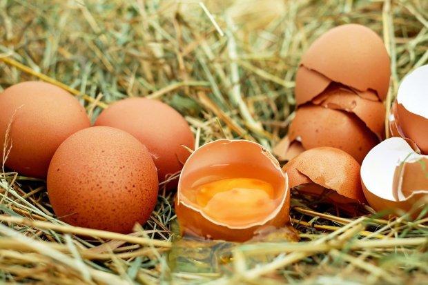 Ragam Manfaat Telur untuk Kesehatan dan Kecantikan