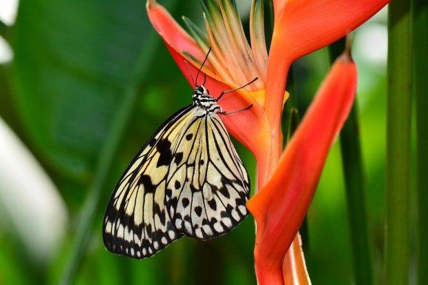 Ilustrasi pola interaksi makhluk hidup di dalam ekosistem