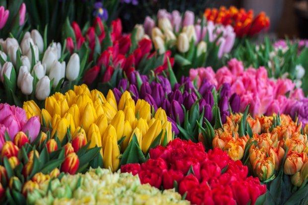 Salah satu nama bunga yaitu tulip