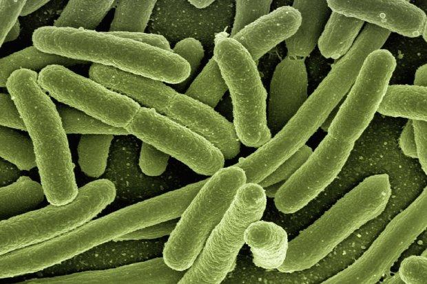 Ilustrasi Bakteri