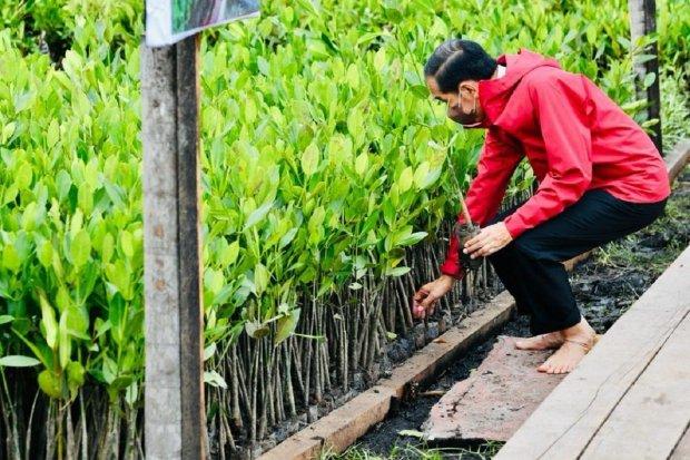 Jokowi, mangrove, lingkungan, karbon
