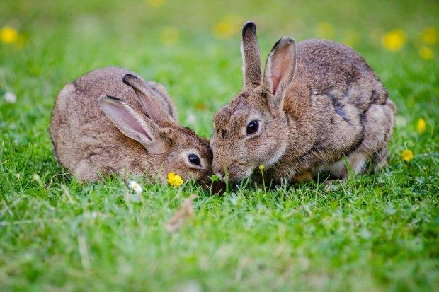 Kelinci, Hewan Menggemaskan Cocok untuk Dipelihara di Rumah