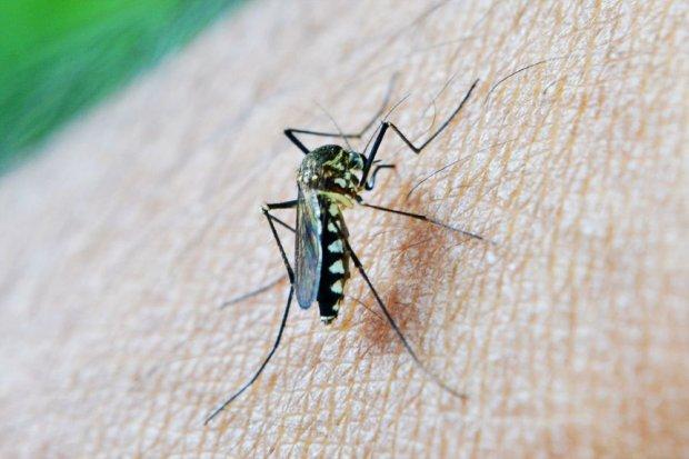 WHO, malaria
