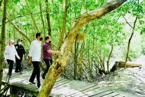 Presiden Joko Widodo saat meninjau hutan mangrove di Taman Hutan Raya Ngurah Rai, Bali, pada Jumat, 8 Oktober 202. Foto: Laily Rachev - Biro Pers Sek