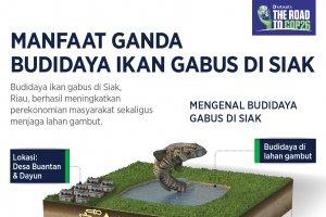 Infografik_Manfaat Ganda Budidaya Ikan Gabus di Siak