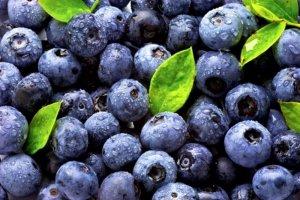 Ilustrasi buah blueberry