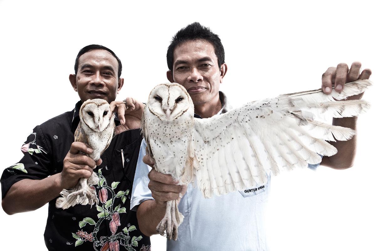 Tyto Alba KATADATA | Donang Wahyu