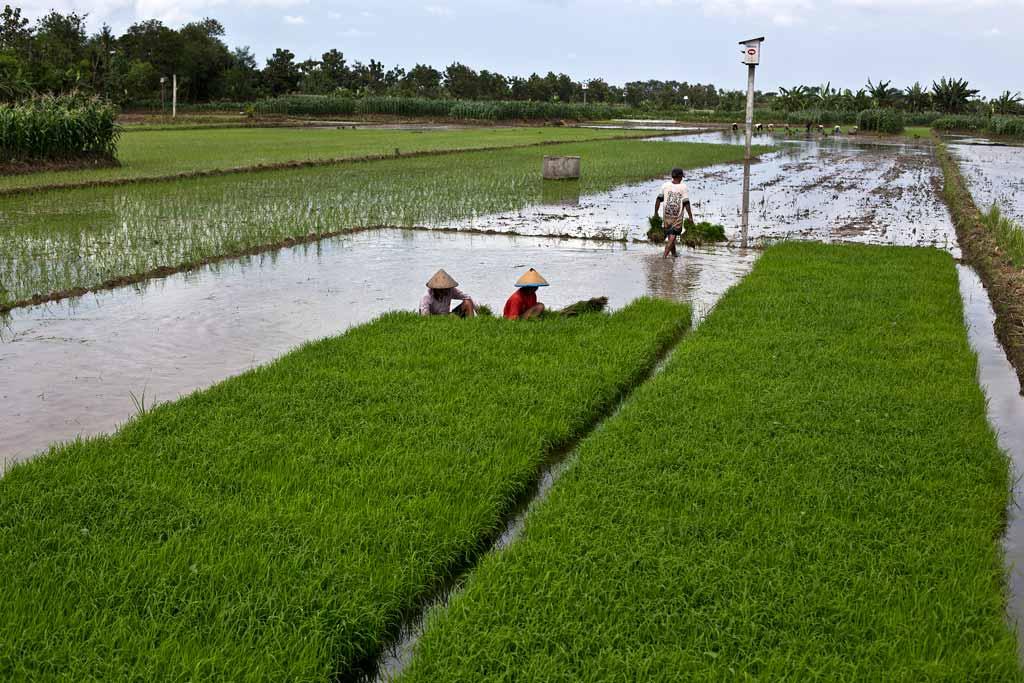 Pemerintah Akan Bangun Kolam 3 9 Juta Hektare Untuk Irigasi Pertanian Infrastruktur Katadata Co Id